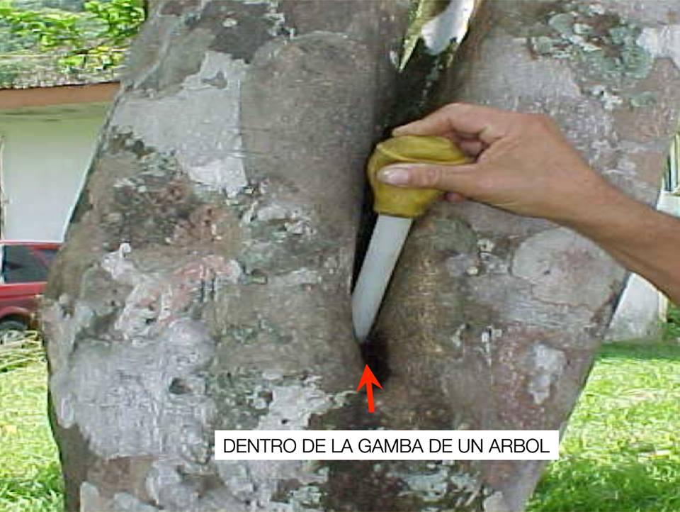 Criaderos del Dengue