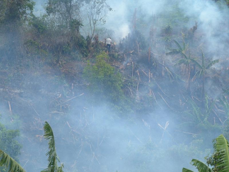 Sala IV acepta nueva acción de inconstitucionalidad contra quemas de caña
