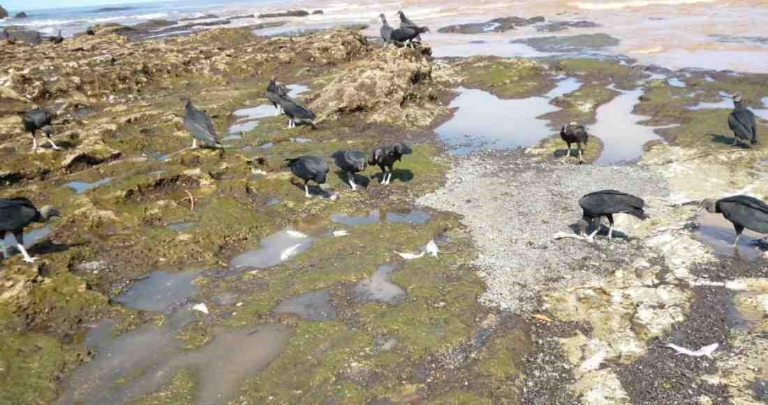 Miles de peces encontrados muertos en Río Nosara