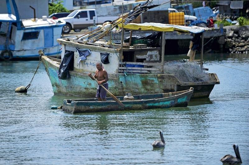 Finalizó periodo de Veda, en el Golfo de Nicoya
